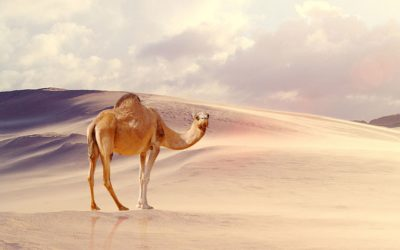 Do Unicórnio ao Camelo: O quê podemos nos atentar em nossas Startups