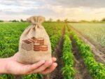 As projeções para o agronegócio no Brasil